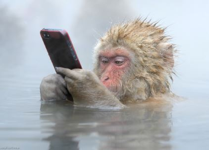 Monkey on Cell Phone